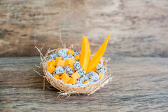 Owocowa sałatka z smoka melonowem w połówce koksu i owoc Fotografia Stock