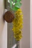 Owocowa skorupa z sztucznego kwiatu i liścia obwieszeniem na ścianie Obrazy Stock