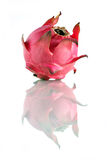 owocowa smok czerwień Zdjęcie Royalty Free