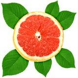 owocowa winogrona zieleni liść Ross sekcja Obrazy Royalty Free