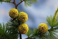 owocowa zieleń Obrazy Stock