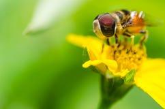 Owocowe kartoteki Kwiatu hover lub kartoteki lub segregują macro obrazy royalty free