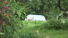 Owocowi drzewa r w ogródzie i szklarni w odległości w lato czasie 4K zbiory wideo