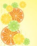 owocowi plasterki Fotografia Stock