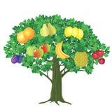 Owocowy drzewo ilustracji