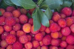 owocowy dziki Obrazy Stock