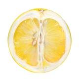owocowy gronowy soczysty Obrazy Royalty Free