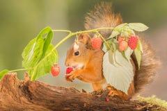 Owocowy jedzenie Obrazy Stock