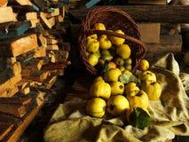 Owocowy kosz bonkrety pigwy jabłka na tle drewno Zdjęcia Stock