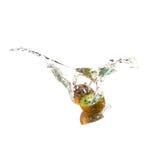Owocowy pluśnięcie kiwi Obrazy Stock