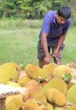 Owocowy stojak w Sri Lanka Fotografia Royalty Free