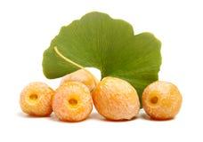 owocowy tła ginkgo wziąć biel ja leaf target1957_0_ Owoc i liść Obrazy Royalty Free