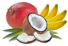 owocowy tropikalny ilustracja wektor