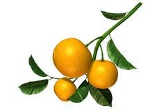 owocowy wapno Zdjęcia Royalty Free