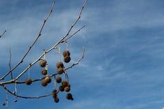 Owocowych Starych oliwka krajobrazu Albania drzew nieba odbicia jeziornych wspaniałych halnych wzgórzy ablero parka drzewna panor zdjęcie royalty free