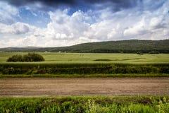 Owsa pola krajobraz Zdjęcie Stock