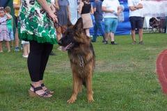 '19,08,2018 owy de Polska KoziegÅ da exposição de cães fotografia de stock royalty free