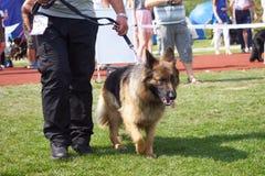 '19,08,2018 owy de Polska KoziegÅ de la exposición canina Fotos de archivo libres de regalías