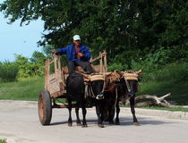 Ox Car With Oxen In Cuba Royalty Free Stock Image