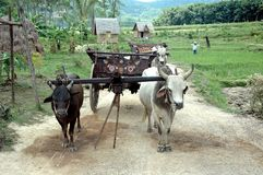 ox cart Obraz Royalty Free