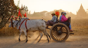 Ox cart carrying people on rural road in Bagan, Myanmar Stock Images