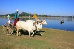Ox cart going along the lake, Amarapura, Myanmar Stock Photography