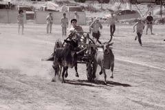 Ox cart racing in Thailand. Royalty Free Stock Photos