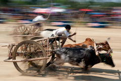 Ox cart racing in Thailand. Stock Photography