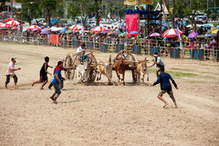 Ox cart racing in Thailand. Stock Images