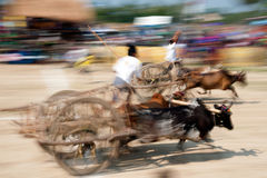 Ox cart racing in Thailand. Royalty Free Stock Image