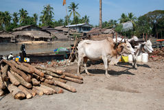 Ox cart at riverside in Kyaikto city,Myanmar. Stock Photo