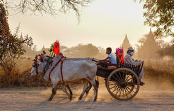 Ox cart running on dusty road at sunset. Bagan, Myanmar - Feb 19, 2016. An ox cart running on dusty road at sunset in Bagan, Myanmar. Bagan in central Burma is Royalty Free Stock Photography