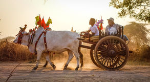 Ox cart running on the rural road in Bagan, Myanmar Royalty Free Stock Photography