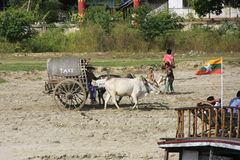 Ox cart on a shore of the river, Mingun, Mandalay, Myanma Royalty Free Stock Photo