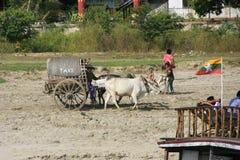 Ox cart on a shore of the river, Mingun, Mandalay, Myanma Royalty Free Stock Photo