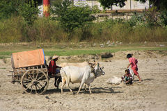 Ox cart on a shore of the river, Mingun, Mandalay region, Myanma Stock Photography