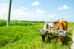 Ox Cart Royalty Free Stock Photo