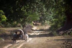 Ox cart to the village near Mingun Pagoda,Myanmar. Royalty Free Stock Image