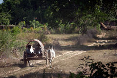 Ox cart to the village near Mingun Pagoda,Myanmar. Stock Photography