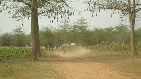 Back view of a farmer driving an empty oxcart on dusty rural path through tobacco fields