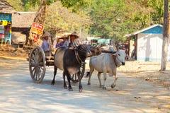 Ox carts in Mingun, Myanmar Royalty Free Stock Photography