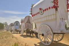 Ox carts Royalty Free Stock Photography