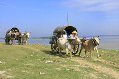 Ox carts for tourists in Mingun, Mandalay, Myanmar Royalty Free Stock Photo