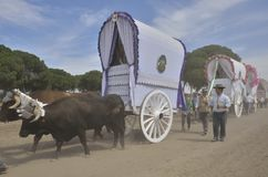 Ox carts in the way to El Rocio Royalty Free Stock Images