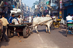 OX chart in the narrow streets of old Delhi Royalty Free Stock Photos
