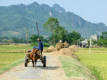 Ox dragging a cart in paddy fields Stock Image