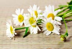 Ox-eye λουλουδιών μαργαρίτα Στοκ Εικόνες