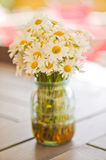 Ox-eye daisy or oxeye daisy. English names are common daisy, dog daisy and moon daisy. White blooming flowers in the vase. Leucanthemum vulgare royalty free stock images