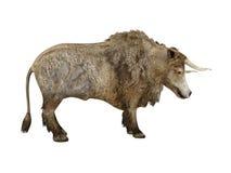 Ox. Isolated on white background. Illustration royalty free illustration