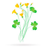 Oxalis. Acetosella.yellow flowers for postcards Stock Photo